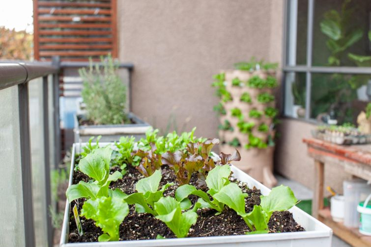 Growing seasonal plants can keep your deck exciting and useful all year.